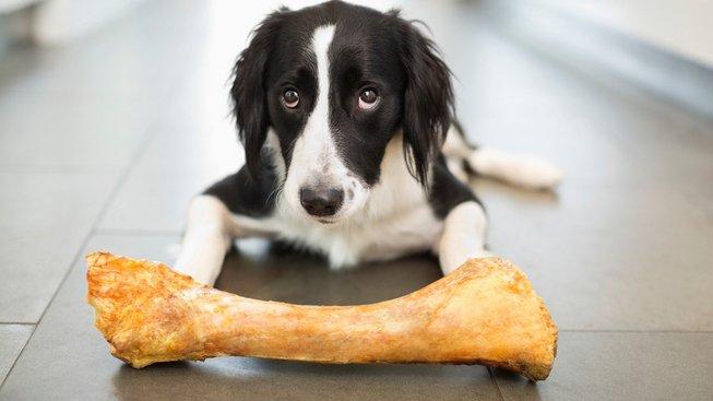 Nebezpečné jedy: Co pes nesmí nikdy ani ochutnat?