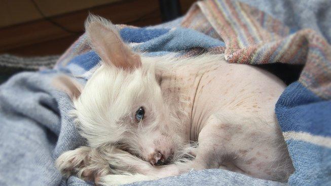 puppy-1684821_1280