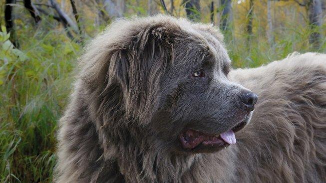 dog-1840127_1920