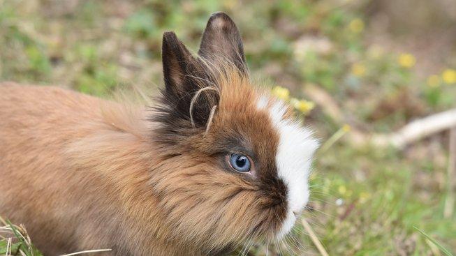 rabbit-4128153_1920