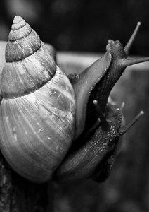 snails-612943_1280