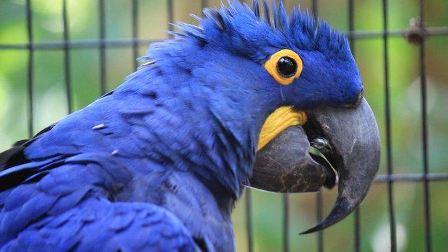 macaw-hyacinth-2659041_1280