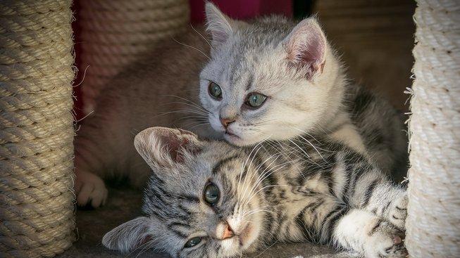 kitten-4257631_1920