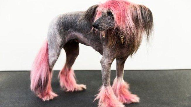 Růžové nebo zelené chlupy: Proč nebarvit svá zvířata