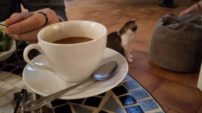 Přítulná káva: Podívejte se s námi do kočičí kavárny