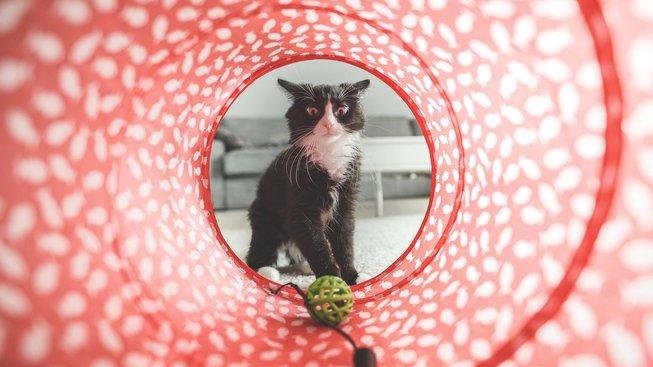 Kočky na svá jména slyší, ale ignorují to, říkají vědci