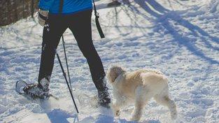 Orientační pochod se psem mnohdy přinese řadu nezapomenutelných zážitků