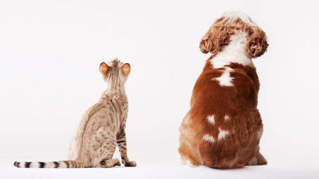 Jsou lepší psi, anebo kočky?