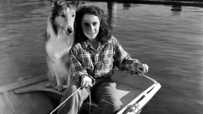 Stal se psí superstar, proč ho původně nechtěli?