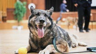Policejní pes, ilustrační snímek