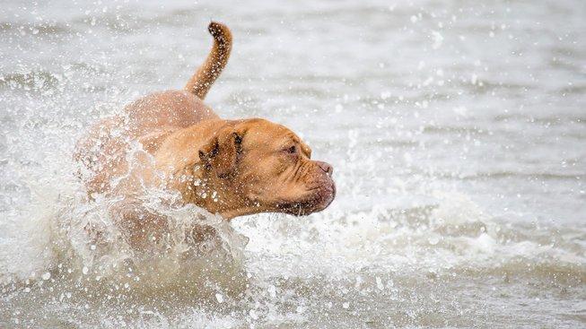 Jak zbavit psa hrůzy z vody?
