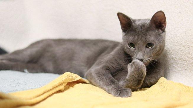 cat-2480778_1920