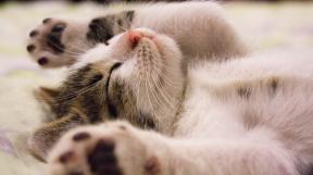 kitten-2288404_1920