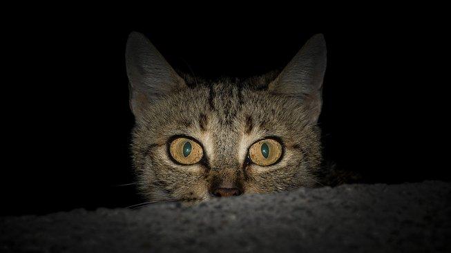 Víte, co vaše kočka dělá po setmění?