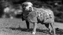 Seržant Stubby: Pes, který varoval před nebezpečím