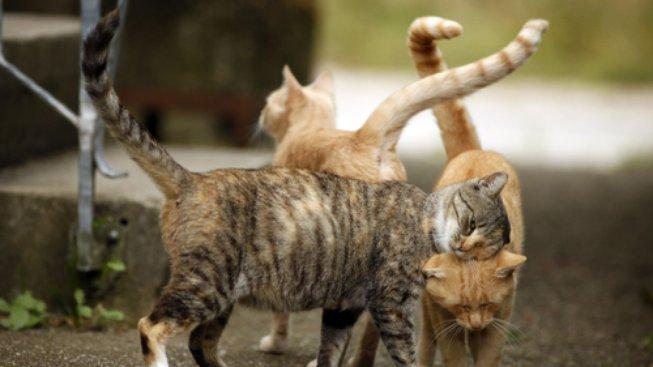 žít velkou kočičku