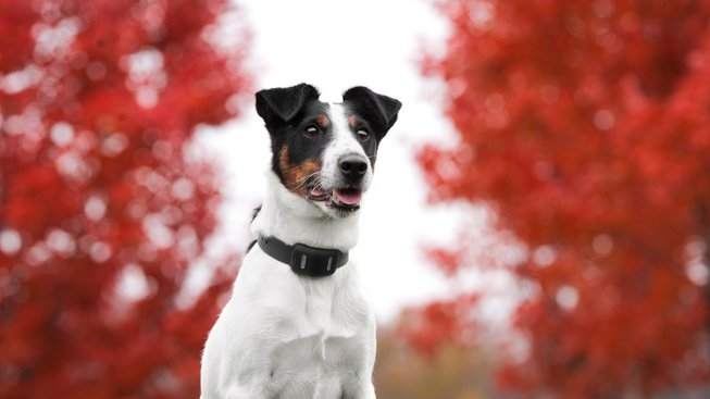 Utíká vám pořád pes? Poradíme vám, jak ho vždy najít