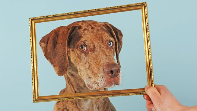 Pes s leopardím kožichem a skleněným pohledem