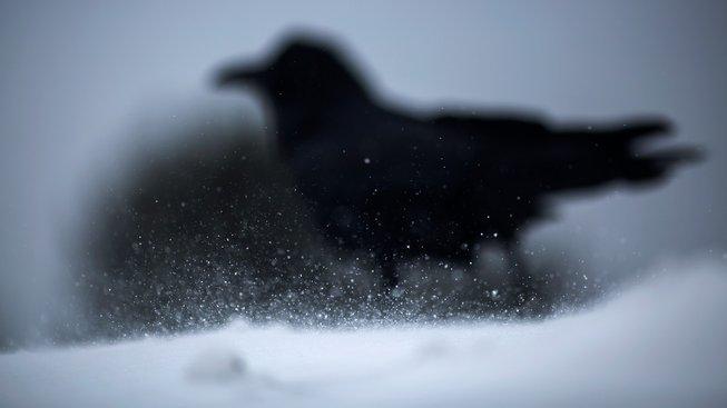 Pták, který zasáhl do literárního světa
