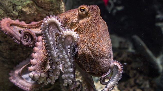 Přístroj inspirovaný chobotnicí