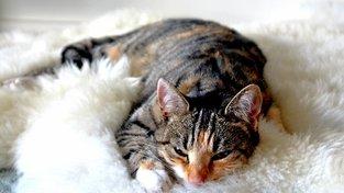 Záhady a taje kočičího předení