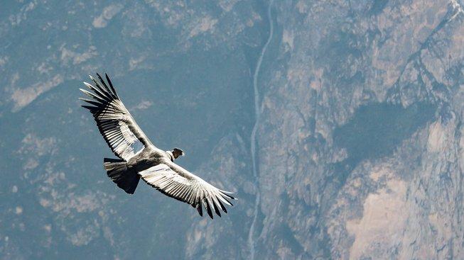 Obrázky masivních ptáků