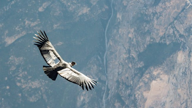 Přijde svět úplně o ptáky? Mizí rekordní rychlostí!