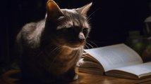 Spisovatel, který přidával kočkám do mléka whisky