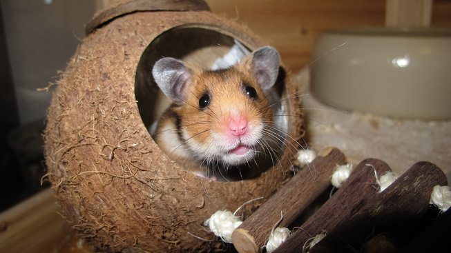 hamster-1803423_1280