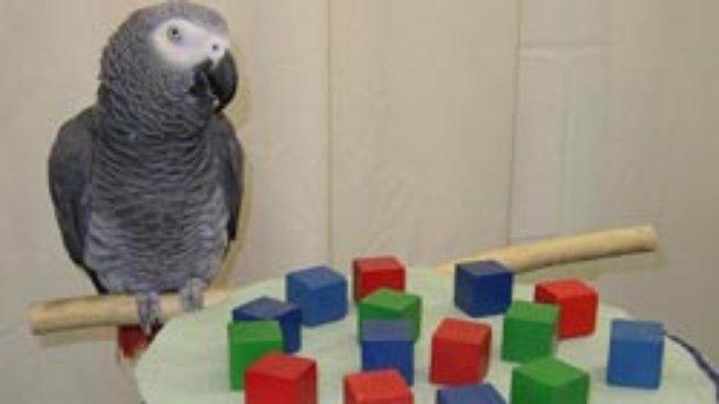 Papoušek, který nabyl podivuhodných schopností