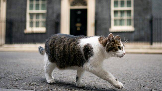 Nejdůležitější kočka v Británii