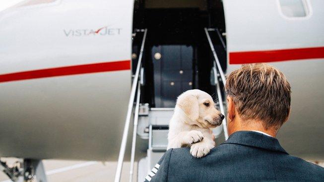 Letíte na dovolenou? Svého psa či kočku vezměte s sebou!