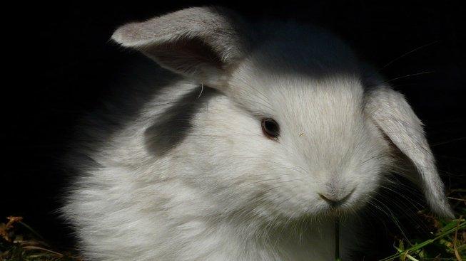 rabbit-1629337_1280