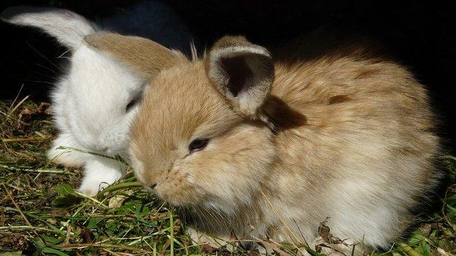 rabbit-1629339_1280