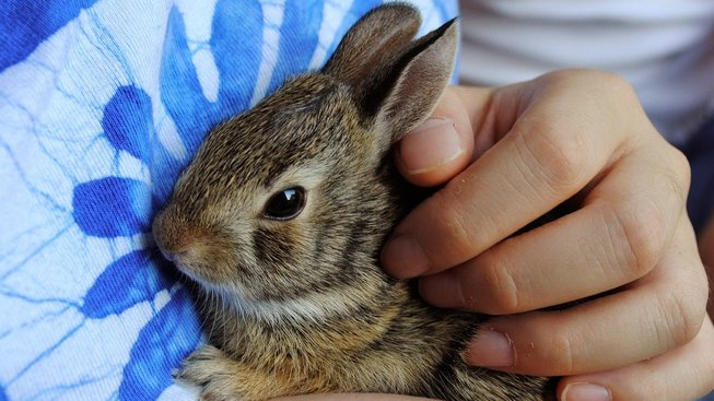 bunny-968856_1280