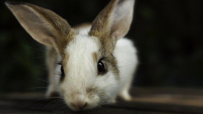 Čím přilepšit králíkovi, aby ho nebolelo bříško