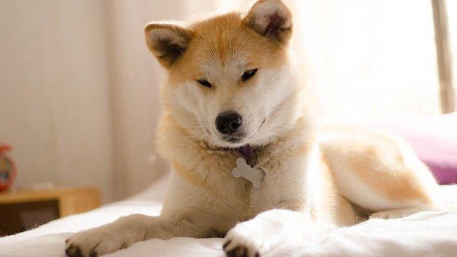 dog-3388069_1280