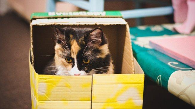Proč kočky tak milují krabice