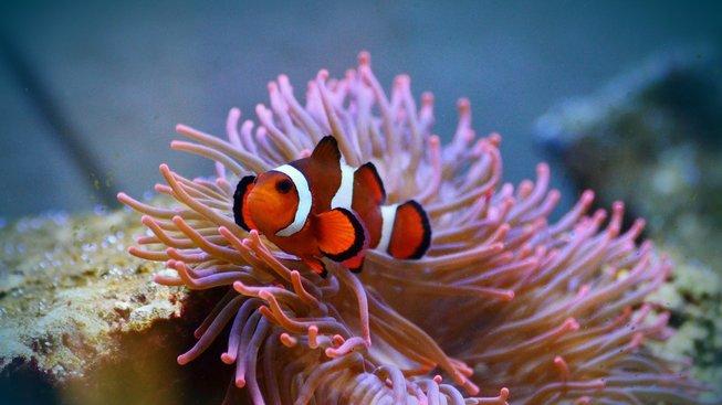 Film, kvůli kterému umírají miliony exotických rybek