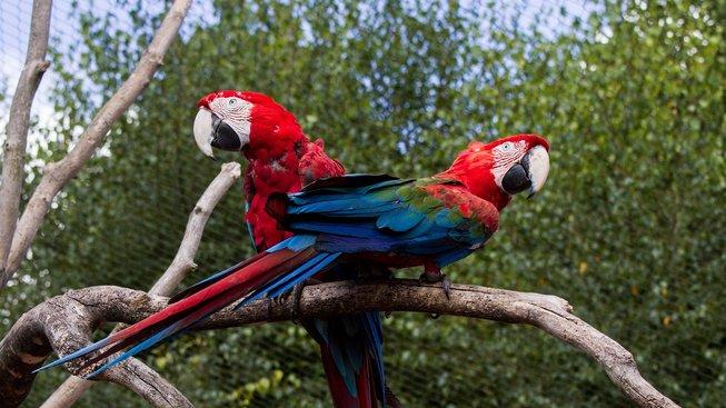 Velký barevný krasavec, který je symbolem papoušků