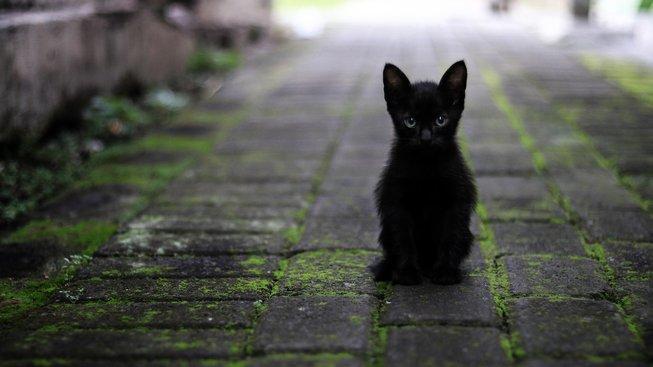 Černé kočičí nohy