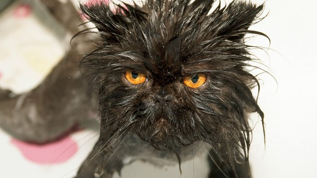 Jak vykoupat kočku a přežít
