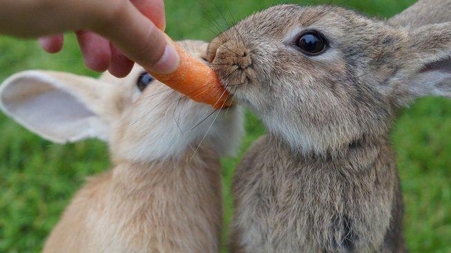 Jak sestavit králíkovi jídelníček, aby prospíval