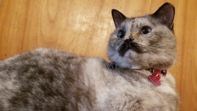 Kočičí dáma, co má noblesní knír