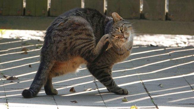 Co na sebe prozrazuje kočka, když se škrábe?