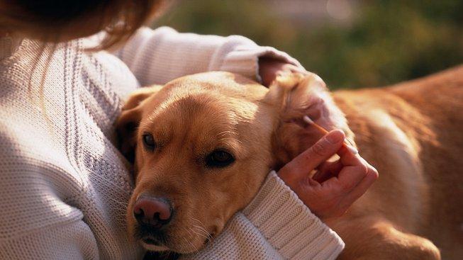 Jak pečovat o psí uši