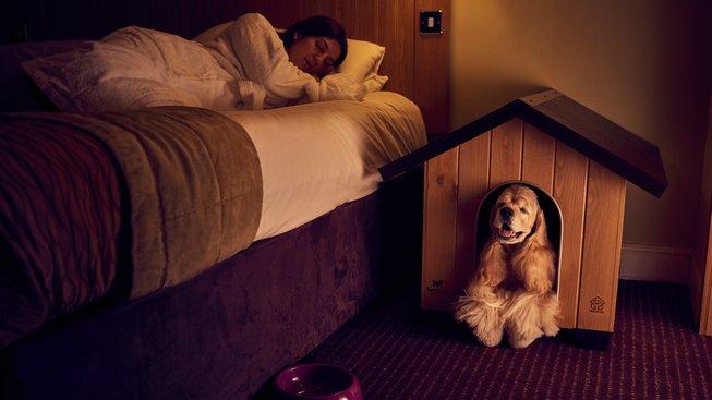 Se psy vstup zakázán? U hotelů už neplatí