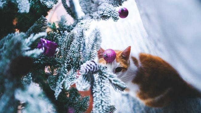 Na čem si smlsnou psi a kočky o Vánocích?