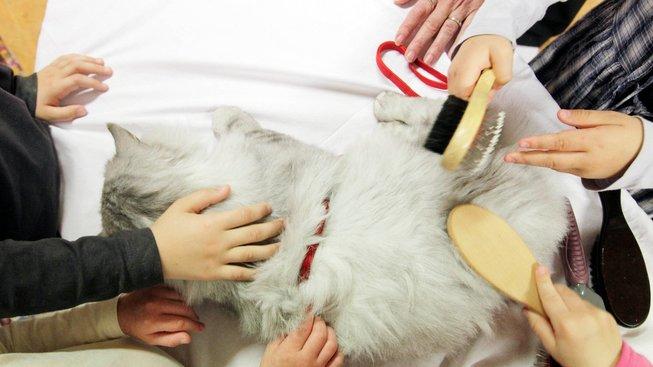 Felinoterapie - když kočky léčí