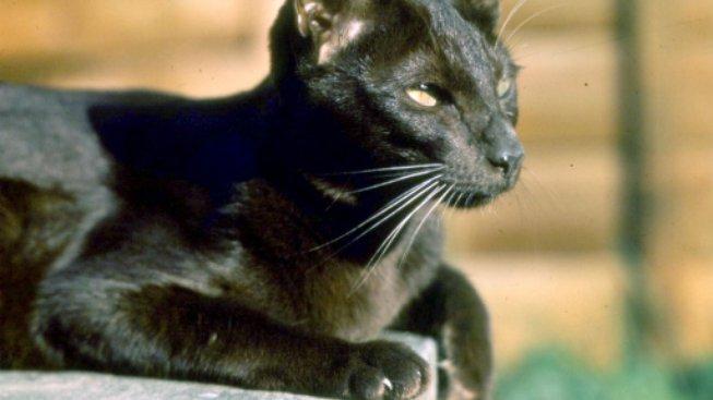 Kočka, která působí ostražitě, ale je to mazel